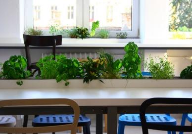 Un nou trend in bucatariile moderne: jardinierele