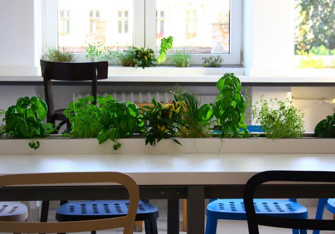 bucatarie cu jardiniere5